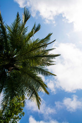 Green Palms And Sky