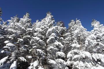 縞枯山展望台付近からの風景(北八ヶ岳)