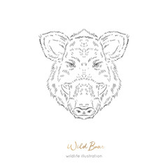 Vector portrait illustration of wild boar forest animal Hand drawn ink realistic animal sketching isolated on white. Perfect for logo branding colourig book design.