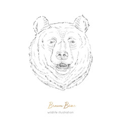 Vector portrait illustration of browm bear forest animal Hand drawn ink realistic animal sketching isolated on white. Perfect for logo branding colourig book design.