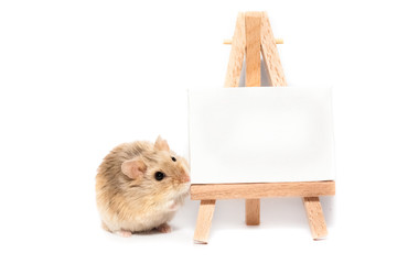 Cute campbell dwarf hamster with easel, white space for text or image