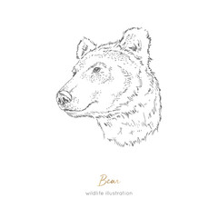 Vector profile portrait illustration of brown bear forest animal Hand drawn ink realistic animal sketching isolated on white. Perfect for logo branding colourig book design.