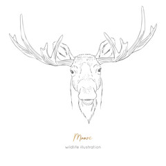 Vector symmetrical portrait illustration of moose forest animal Hand drawn ink realistic animal sketching isolated on white. Perfect for logo branding colourig book design.