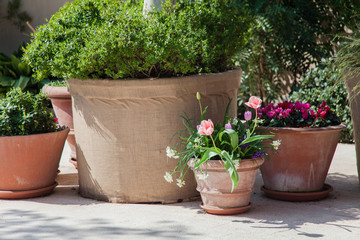 Fotomurales - Spring gardening on city streets. Pink tulips and green plants in flower pots outdoor. Scene with blooming flowers. Floral decoration.