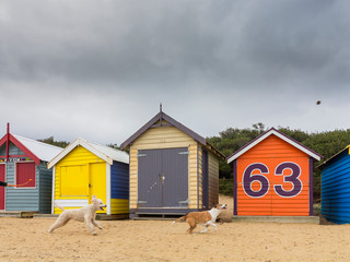 Dogs and Brighton Bathing Boxes, Melbourne