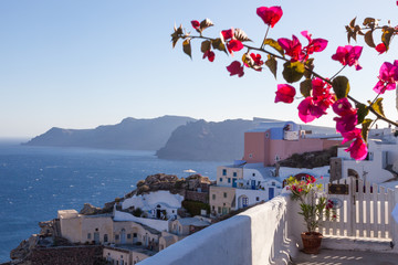 View over caldera with flower and blue sea, Santorin Greece