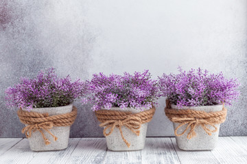Tuinposter Lavendel Small purple flowers in gray ceramic pots on stone background Rustic style Copy space