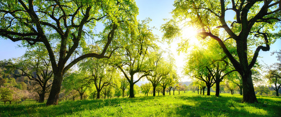 Wall Mural - Beautiful panoramic green landscape with trees in a row