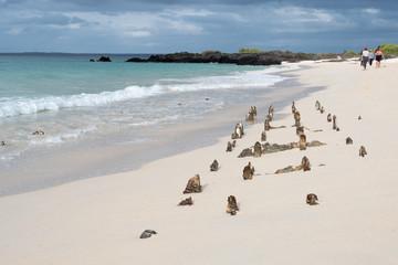 White Sand beach - Santa Cruze, Galapagos