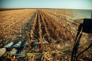 Wall Mural - Combine harvesting corn