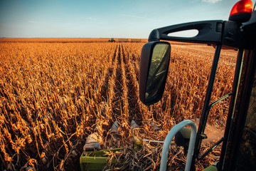 Fototapete - Agricultural harvesting at the corn field