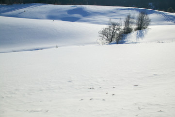 Tranquil scene of a few trees in an open field covered in snow, Stowe, Vermont, USA