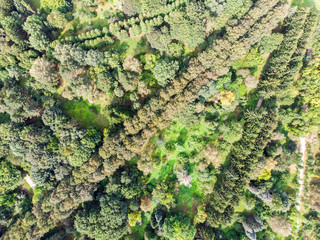 natural landscape aerial top view. green park trees from high above