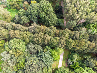 beautiful natural park landscape scene with walking path. aerial top view
