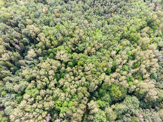 green trees in summer forest. natural landscape aerial top view