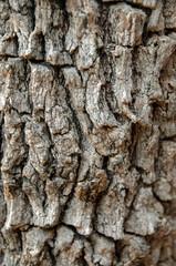 Bark Closeup