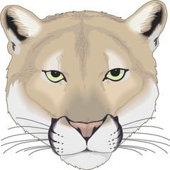 Cougar Vector Illustration