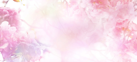 Wall Mural - Abstract floral backdrop of pink flowers with soft style.