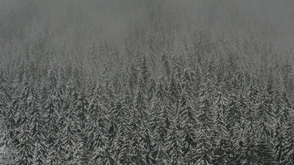 Nebel im Wald im Winter