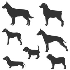 Vector silhouette of dog on white background. Collection of silhouettes of various dogs on a white background. Vector illustration.