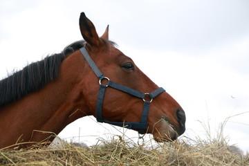 Big horse near a big haystack in a day