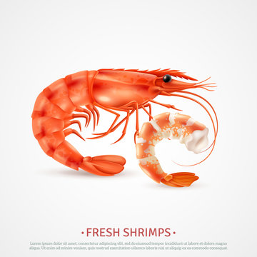 Seafood Shrimps Realistic Advertising