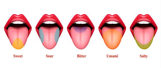 Basic Tastes Realistic Composition