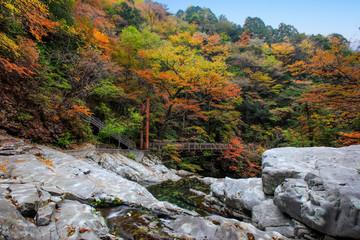 奈良県-天川村-みたらい渓谷-秋