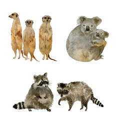 Funny animals: raccoons, koalas and meercats . Isolated on white watercolor.