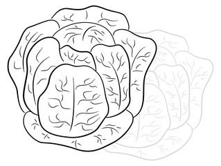 drawn cartoon cabbage