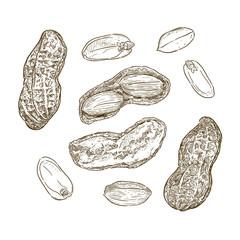 Vector illustration set of peanuts