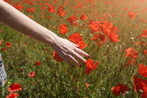 Beautiful girl is standing on summer field full of red poppy