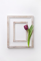 Single tulip in a blank wooden picture frame on a white background. Top view.