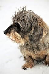 An Image of a dog, animal