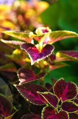 Purple with pink dark green grass