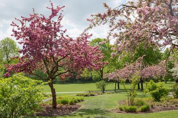 blühende Apfelbäume im Westpark München zur Frühlingszeit