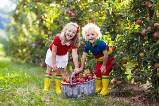 Kids picking apples in fruit garden