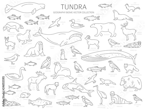 Tundra biome  Simple line style  Terrestrial ecosystem world