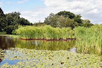 Kirstenbosch Botanical Garden - Capetown