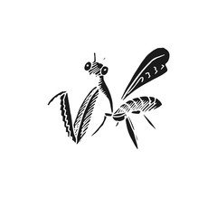mantis vector doodle sketch isolated on white background