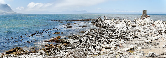 Betty's Bay - Western Cape - South Africa