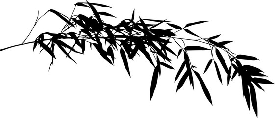 single black bamboo isolated long branch