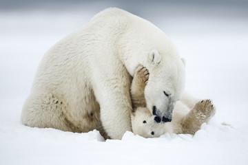 Deurstickers Ijsbeer Polar bear, northern arctic predator