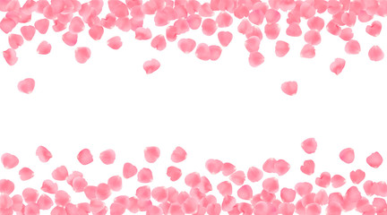 Background with realistic pink rose petals isolated on white background.