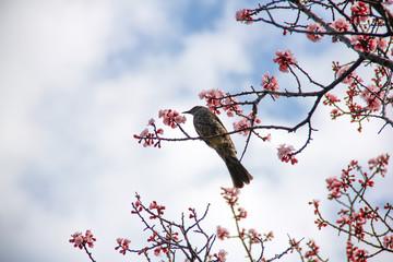 梅の木と鳥