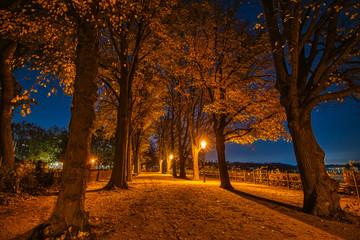Nachtaufnahme einer Allee von Bäumen an der Greenwichpromenade  in Berlin Tegel