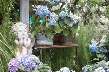 Love Cupid. A classic cupid statue decorated for Valentine's day in a glass house, with hydrangea flowers.