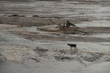 Cervi e Lupi sul lago di Barrea