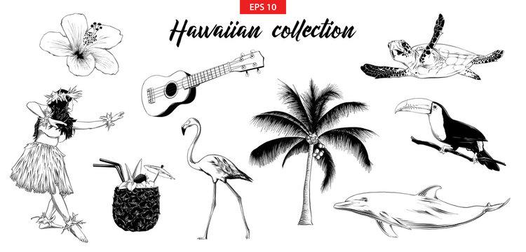 Vector engraved style illustration for logo, emblem, label or poster. Hand drawn sketch set of Hawaiian girl, ukulele guitar, etc. Isolated on white background. Detailed vintage doodle drawing.