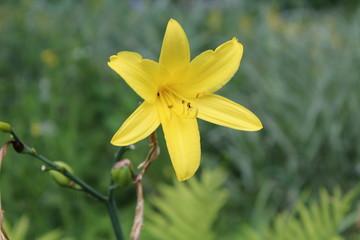 Obraz Żółty kwiat - fototapety do salonu